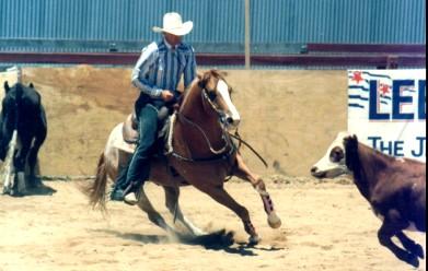 Cayuse Appaloosas & Sportaloosas for sale - Cayuse Sportaloosas